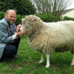 Efemérides del 14 de febrero: sacrificio de la clonada oveja Dolly