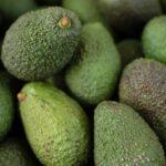 Apurímac: Exportación de palta impulsa desarrollo económico