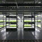 Japón pondrá en marcha la primera granja operada por robotes