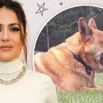 Policía justifica asesinato de perro de Salma Hayek