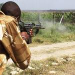 Kenia: Guardabosques matan a balazos león que huyó de reserva (VIDEO)