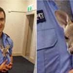 Policía que adoptó a un bebé canguro ha conmovido las redes (VIDEO)