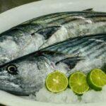 Pasco: Gran demanda de truchas y peces tropicales