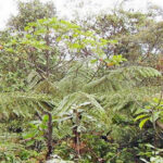 Lambayeque: Cañaris busca conservar sus bosques