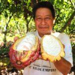 San Martín: Buscan elevar productividad del cacao