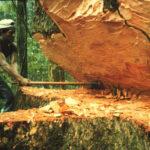 Día de los Bosques: FAO pide reducir deforestación para optimizar agua