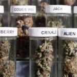 Brasil: Autorizan medicinas con sustancias derivadas de la marihuana