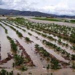 Moyobamba: Desborde de río afecta cultivos
