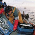 Respaldan creación de zona reservada de pesca Piura-Tumbes