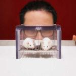 Localizan en ratones neuronas que señalan cuando 'parar' de comer