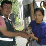 Satipo: Salvan de morir ahogado a tigrillo