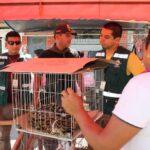 Serfor rescata 27 animales silvestres en selva central