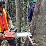 Ucayali: Exportan madera de comunidades nativas