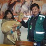 Pasco: Serfor rescata a dos vicuñas bebés
