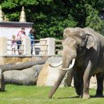 Zoológico de Praga promueve convertir estiércol de elefante en papel