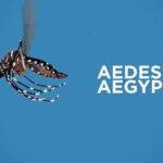 Zika: Desarrollan método barato para combatir el mosquito Aedes aegypti