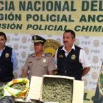 Áncash: PNP incauta más de 1,800 plantones de marihuana