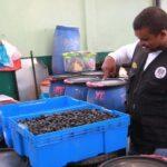 La Victoria: Cierran almacenes de aceitunas descompuestas