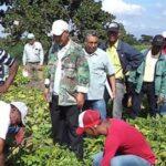 Pichanaki: Citricultores son informados sobre plagas
