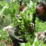 Vraem: bloqueo a 'narcoavionetas' derrumbó el precio de la coca