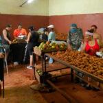 Cuba planea mercados mayoristas de alimentos para sector privado
