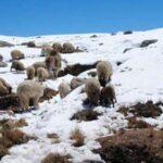 Desde este lunes: pronostican heladas leves a moderadas en región Puno