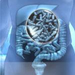 Bebidas azucaradas y 'picar' entre horas afectan microbiota intestinal