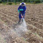 MINAGRI controla tres focos de plaga de langosta en Abancay