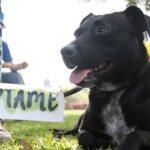 San Borja: Vecinos promueven adopción de mascotas