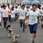 """""""Perrotón"""": Singular actividad que concentró más de 500 canes en Ventanilla"""