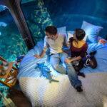 Noche romántica de 3 parejas entre 35 tiburones en el Acuario de París
