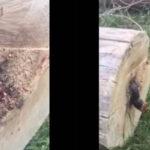Cortó un árbol y lo que encontró dentro fue realmente aterrador (VÍDEO)