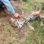 Brasil: 475 millones de animales mueren atropellados en carreteras cada año