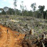 United Cacao deforestó 1.900 hectáreas de la Amazonía peruana sin permisos