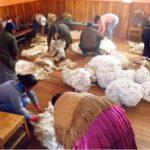 Sierra Exportadora capacita a productores alpaqueros