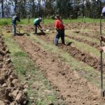 La Libertad: Siembran 2 millones de árboles de Santiago de Chuco