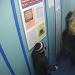De milagro se salva mascota cuando su correa quedó atorada en ascensor (VÍDEO)