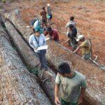 Satipo: Extraen madera ilegal de comunidad nativa