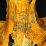 EEUU: Momia de 3 mil años con profusos tatuajes asombra a arqueólogos (FOTOS)