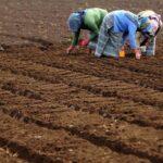 OMM: El Niño se debilita y es improbable que se reactive en 2016