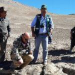 Moquegua: Hallan vicuñas muertas por cacería