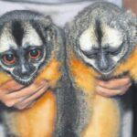 Perú y Ecuador acuerdan combatir tráfico de madera y animales