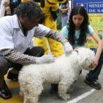 Arequipa: Realizarán campaña de vacunación canina