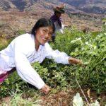 IICA: Sierra peruana guarda gran potencial para el desarrollo