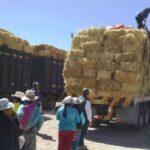 Arequipa: Agro Rural protegerá de heladas al ganado alpaquero