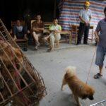 Yulin inicia mañana su controvertida carnicería de perros
