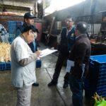 VMT: Clausuran avícolas y decomisan más de mil pollos en mal estado