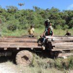 Pasco: Serfor decomisó madera ilegal de bosque
