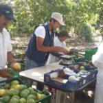 Motupe: Exportarán 100 toneladas de maracuyá