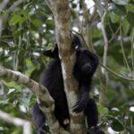 Un mono provoca un apagón eléctrico en toda Kenia